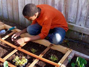 jardinage-potager